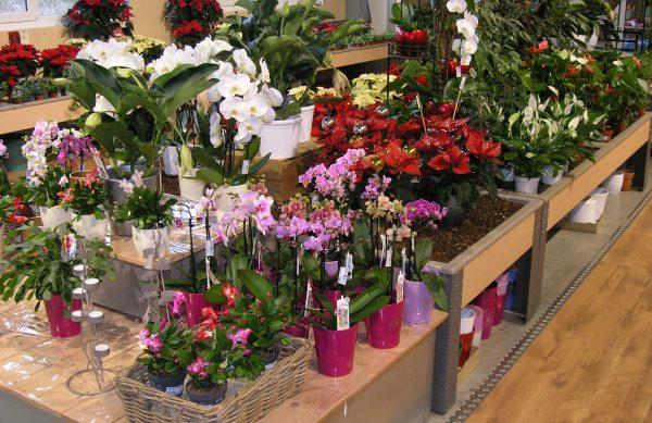 Zimmerpflanzen auf Ihrem Gartenmarkt Meisenbach