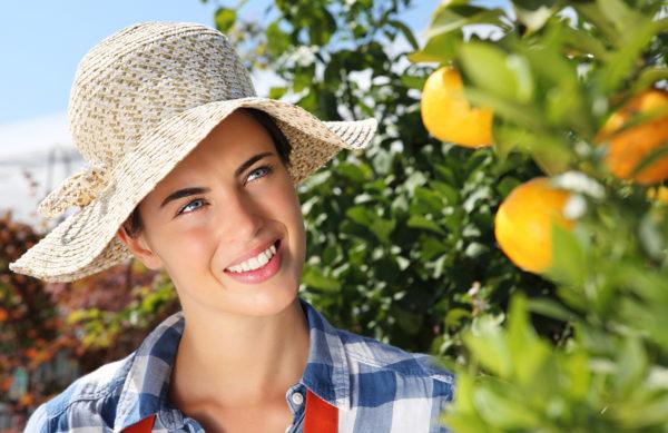 Gartenpflanzen Sortiment